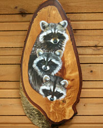 Racoons on Birch